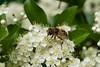 fullsizeoutput_cdd8 (Fan Majie 範瑪姐) Tags: mimicry mayflower tuinstadstaalwijk herenstraat leiden