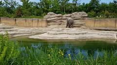 20180523_122553 (TheSlayerNL) Tags: wildlands emmen zoo dieren animals adventure wildlandsadventurezoo
