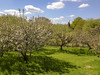Orchard and Oast (Gareth Christian) Tags: sonydschx90v kentwildlifetrust boughbeech kwt orchard apple blossom oasthouse oast nature tree appletree