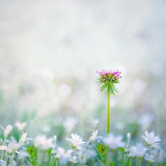 Spring garden (Ro Cafe) Tags: 52semanas52palabras naturaleza nature garden flowers soft softfocus selectivefocus white pink outdoors nikkor2470f28 nikond600