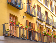 Balconies in Sevilla (✦ Erdinc Ulas Photography ✦) Tags: balcon balconies balcony sevilla seville spain spanish city traditional flowers doors door window yellow paint wall culture fence plant flower españa house houses appartment levels white green colourful old panasonic focus detail