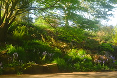 Shady Rockery (Dave Roberts3) Tags: wales newport park bellevue path light fence rockery shadow shade tree flowers bluebells ferns naturethroughthelens