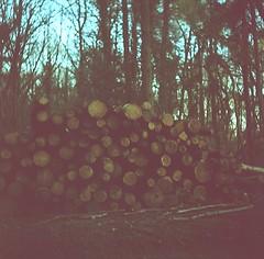 l2 - pile of logs (johnnytakespictures) Tags: lomo lubitel lubitel2 tlr twinlensreflex film analogue soviet russian photo photography mediumformat 120 kodak ektachrome expired expiredfilm xpro crossprocess crossprocessed hartshill hartshillhayes nuneaton warwickshire evening sun spring afternoon dusk log logs wood tree trees deforestation stack stacks pile collection nature natural bark