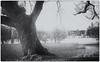 Emo Court (kckelleher11) Tags: 1445mm 2018 bw black court december ep2 emo ir infrared ireland olympus white house laois panasonic tree