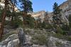 Stump (Brandon Rasmussen) Tags: utah dixienationalforest boxdeathhollowwilderness thebox escalantebox hiking backpacking nature landscape desert canyon americansouthwest southwest nikond7100 nikkor1224mmf4g 1224f4