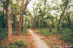 Upper Cotee Preserve (J. Parker Natural Florida Photographer) Tags: pascocounty hike hiking landscape naturalbeauty nature outdoor scenic trail path green spring florida centralflorida vsco vscofilm color colorful woods forest trees uppercoteepreserve tree