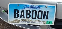 Baboon (rabidscottsman) Tags: scotthendersonphotography licenseplate sd southdakota deadwoodsouthdakota travel baboon wtf funny friday greatfacesgreatplaces samsung samsunggalaxys6 cellphonephotography 3