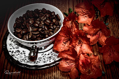 Coffee Beans and Flowers (Randall ]|[ Photography) Tags: color ilce6000 nc northcarolina us usa unitedstates a6000 alpha amazing azalea beautiful beverage bowl brown china coffee cup dark diner dinnerware dish drink flower flowerhead food home house image indoor indoors inside interesting nice peach photo photographer photography pic picture plate pretty randall red silver sony table tableware white wood winstonsalem