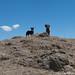 Dogs enjoying the view from Laguna Wilkacocha