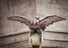 Grand Central Eagle (Singing With Light) Tags: 13th 2018 alpha6500 april bahbahra mirrorless nyc singingwithlight snow sonya6500spring statues sunny walkingthecity architecture colors manhattan photography singingwithlightphotography sony