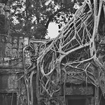 Roots of Ta Prohm thumbnail