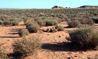 Proceeding towards Antelope Canyon, Arizona, USA.