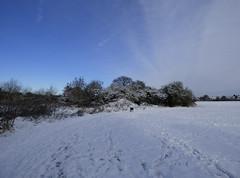 Run ahead (Lexie's Mum) Tags: snow cold winter december2017 ice lester dog walk