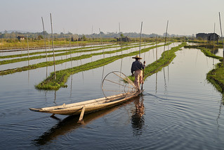 Pêcheur du Lac Inle #2  [ Birmanie (Myanmar) ]