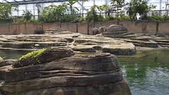 20180523_113331 (TheSlayerNL) Tags: wildlands emmen zoo dieren animals adventure wildlandsadventurezoo