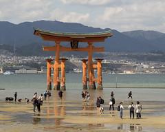 The Great Torii, Itsukushima Shrine (fotographis) Tags: leica leicam240 japan itsukushimashrine itsukushima miyajima torii 90mmsummicron summicron lowtide bay