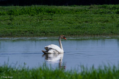IMG_8848 (SanRoku) Tags: birds nature photography horse turtles duck flower reserve isola cona gorizia italy veneto flying passion light water family love swan frog isonzo river bright landscape canon 75300 camargue wood
