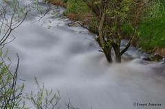 Recogiendo la cosecha (erfuga) Tags: andorra encamp valiradorient valira río agua riu aigua arbol arboles curso paisaje largaexposición nikon tripode nd