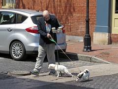 Multitasking (Multielvi) Tags: baltimore maryland md city fells point broadway man dog candid