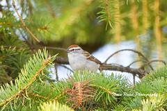 IMG_5960 (nitinpatel2) Tags: bird nature nitinpatel