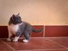 3606 - Bruto (Diego Rosato) Tags: bruto kitten gattino animale animal pet cat gatto fuji x30 rawtherapee