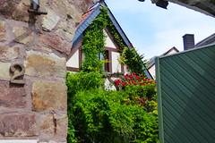 Behind The Gate (ivlys) Tags: rheingau kiedrich tor gate fachwerkhaus halftimberedhouse rose blume flower ivlys