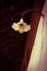 flower light (Sandeep_Govindan) Tags: antique flowerlight cobweb