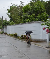 riding a bicycle in the rainy season (the foreign photographer - ฝรั่งถ่) Tags: man bicycle umbrella our street bangkhen bangkok thailand nikon d3200