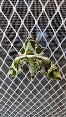 #Mariposa (graciamarch22) Tags: mariposa