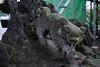 狛犬さん 吽 (kasa51) Tags: 狛犬 komainu shrine 神社 statue sculpture yokohama japan
