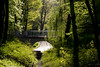 hidden... (iwona.kilichowska) Tags: park trees forest green scenery nature plants light spring bridge river water woods outside view