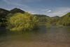 Lac de Kruth Wildenstein (Gisou68Fr) Tags: lac lake see wildenstein kruth alsace hautrhin grandest france eau water arbres trees saules salix willow ciel sky nuages clouds canoneos650d pédalo 68 2018 avril april ngc