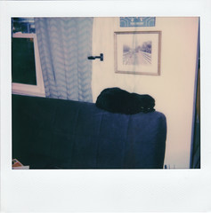 Gordon the Cat (m.ashe7) Tags: polaroid polaroidspectra polaroidoriginals polaroidweek spectra instantfilm cat indoors washedout