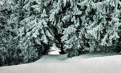 Combloux lomography turquoise 02 2018031 (Patrick.Raymond (4M views)) Tags: alpes haute savoie megeve comloux montagne neige froid gel bois arbre foret argentique nikon lomography turquoise