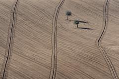 Geometrie rurali marchigiane (luporosso) Tags: natura nature naturaleza naturalmente nikon nikonitalia geometrie geometry alberi trees terra heart marche italia italy astratto abstract