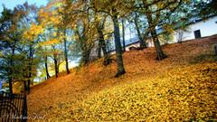 Autumn in Przemysl. Poland. (kud4ipad) Tags: 2017 poland przemysl autumn gold foliage fall sky park green orton