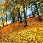 Autumn in Przemysl. Poland. thumbnail