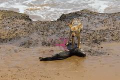 IMG_0272 (tregnier) Tags: namibia roadtrip africa travel desert animals sossusvlei leopard cheetah lion solitaire trip