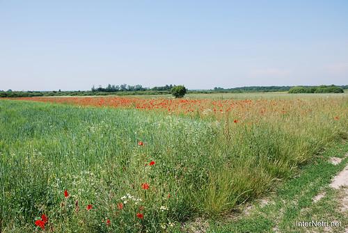 Волинь Літо 2011 року InterNetri Ukraine 2011 02