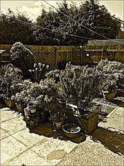 My Garden  Sepia (brianarchie65) Tags: flowers gaeden horse plants patio trees woodenhorse lapollution rubbish pots fence ngc unlimitedphotos sepia antique iphonese flickrunofficial flickruk flickr flickrcentral ukflickr geotagged brianarchie65