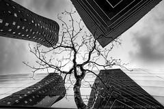 _DSC0707-1 (lluisg8207) Tags: barcelona bcn city edificios arbol byn atrapado sonya7rm3 zeiss1828 nsfotografía nsexprerience asociaciópenyafotogràficabadalona