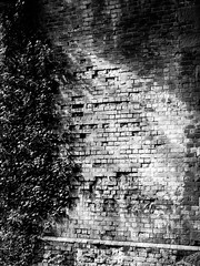 Brick railway viaduct wall (Andy Sut) Tags: wall overgrown leaves disused arch bw blackandwhite monochrome railway train england leicestershire derelict abandoned brick viaduct bridge victorian