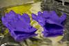 DL747492945-09 (McrMan68) Tags: daresbury warrington lab labs physics science daresburylab daresburylaboratory stfc scienceandtechnologyfacilitiescouncil photowalk walk accelorator engineering gloves foil tinfoil rubbergloves purple
