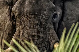 EYE OF THE ELEPHANT:  Spiritual Meaning