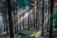 Otxandio (I_M_B) Tags: naturaleza nature senderismo hiking bosque forest woods trees árboles vegetación vegetation landscape paisaje euskadi paisvasco basquecountry spain españa
