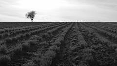 Epanomi fields