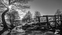 footbridge at longshaw (Royston King) Tags: monochrome landscapes longshaw nationaltrust peakdistrict derbyshire