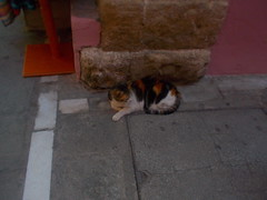 DSCN1094 (leosebastian100) Tags: rethymnon hellas greece cat white orange brown chat