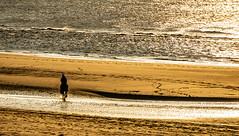 never stop dreaming (Wöwwesch) Tags: horse beach sunset ocean coast ride reflections sun sand water