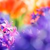 _4200793-2 (omj11) Tags: fleurs flou carré couleur